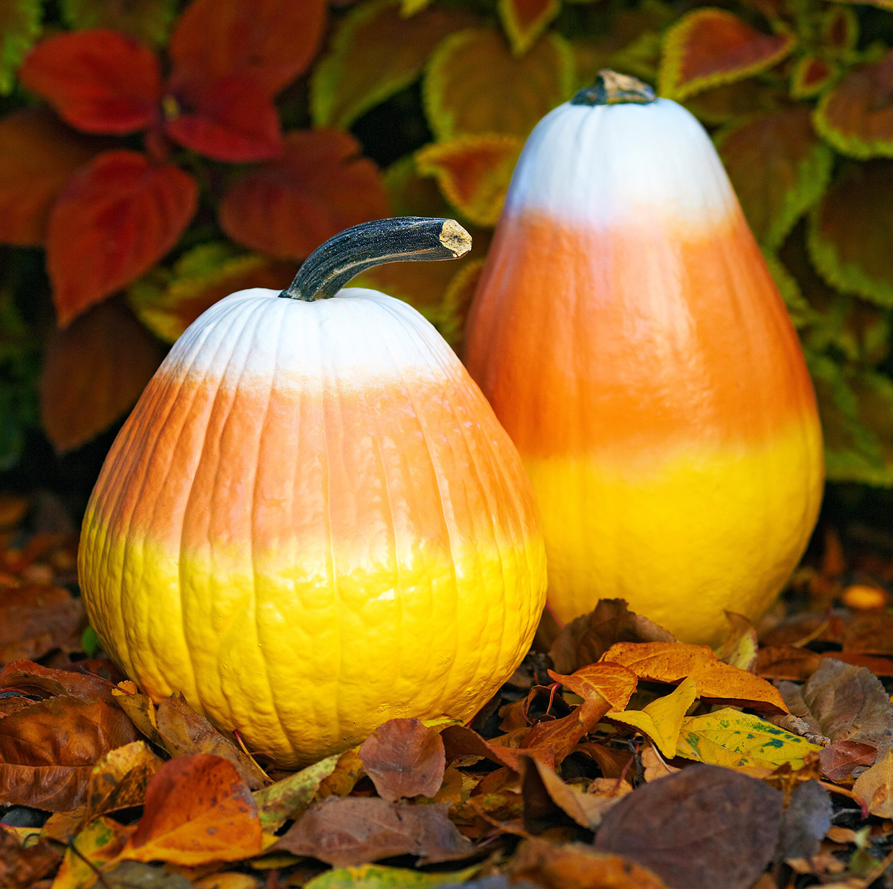 candy-corn cone-shaped pumpkins