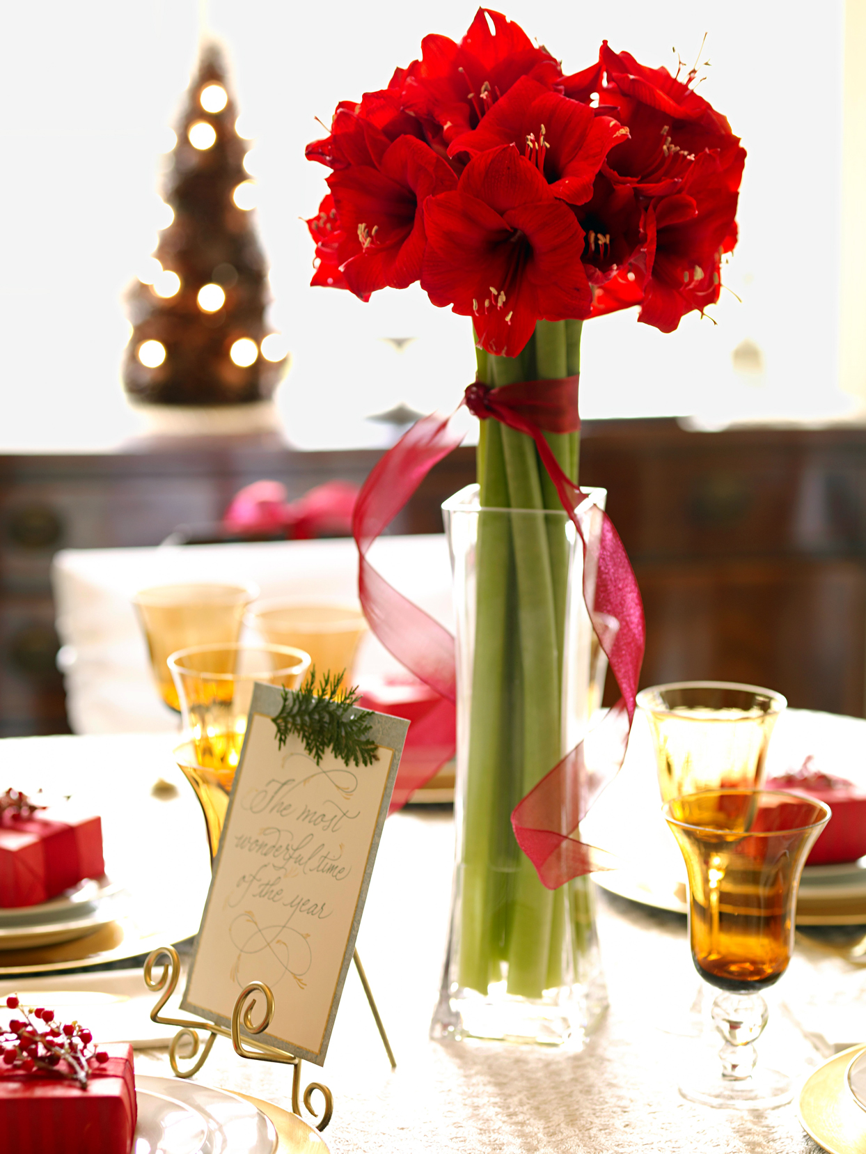 Long-Stemmed Red Amaryllis