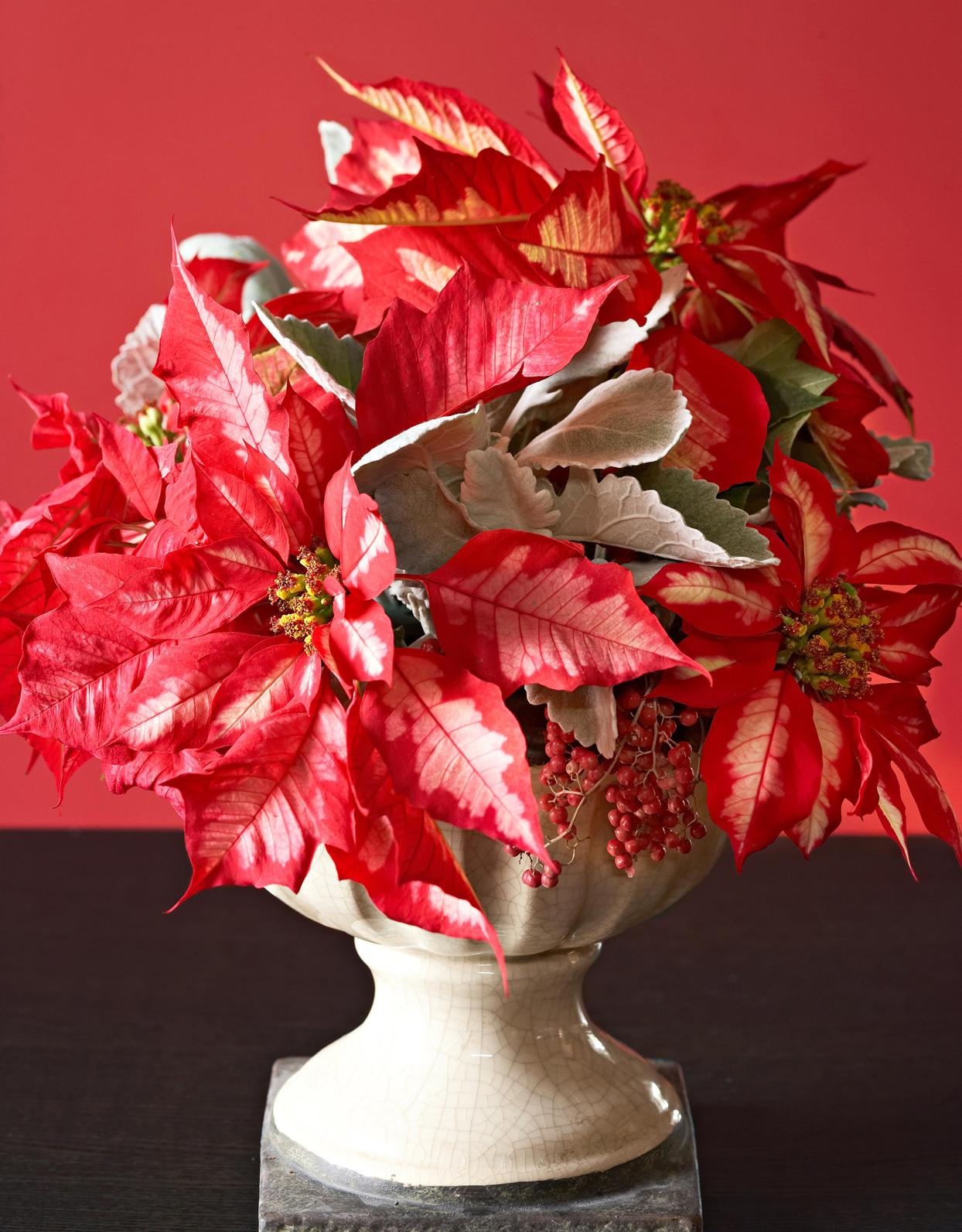 Red-and-silver poinsettia