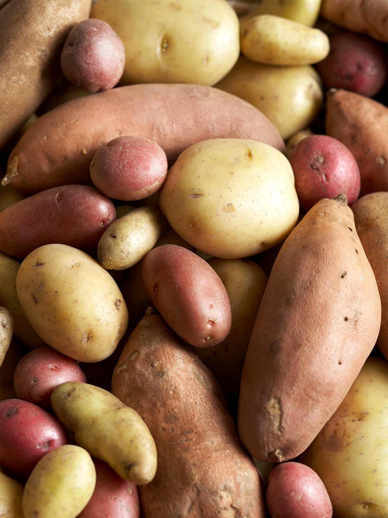 variety of different types of potatoes including Russet, Red and Yukon Gold