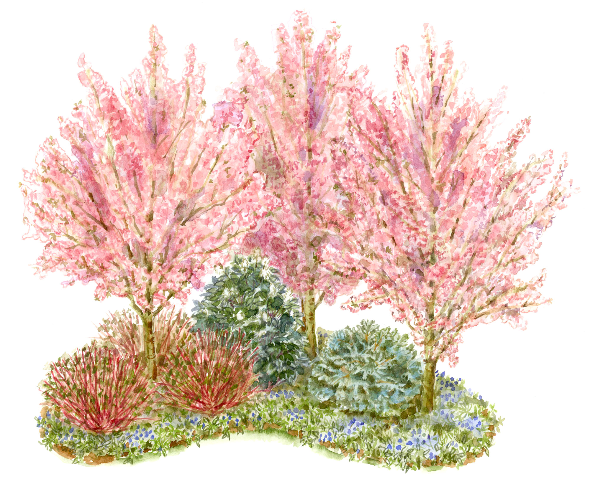 Corner of Shrubs garden illustration