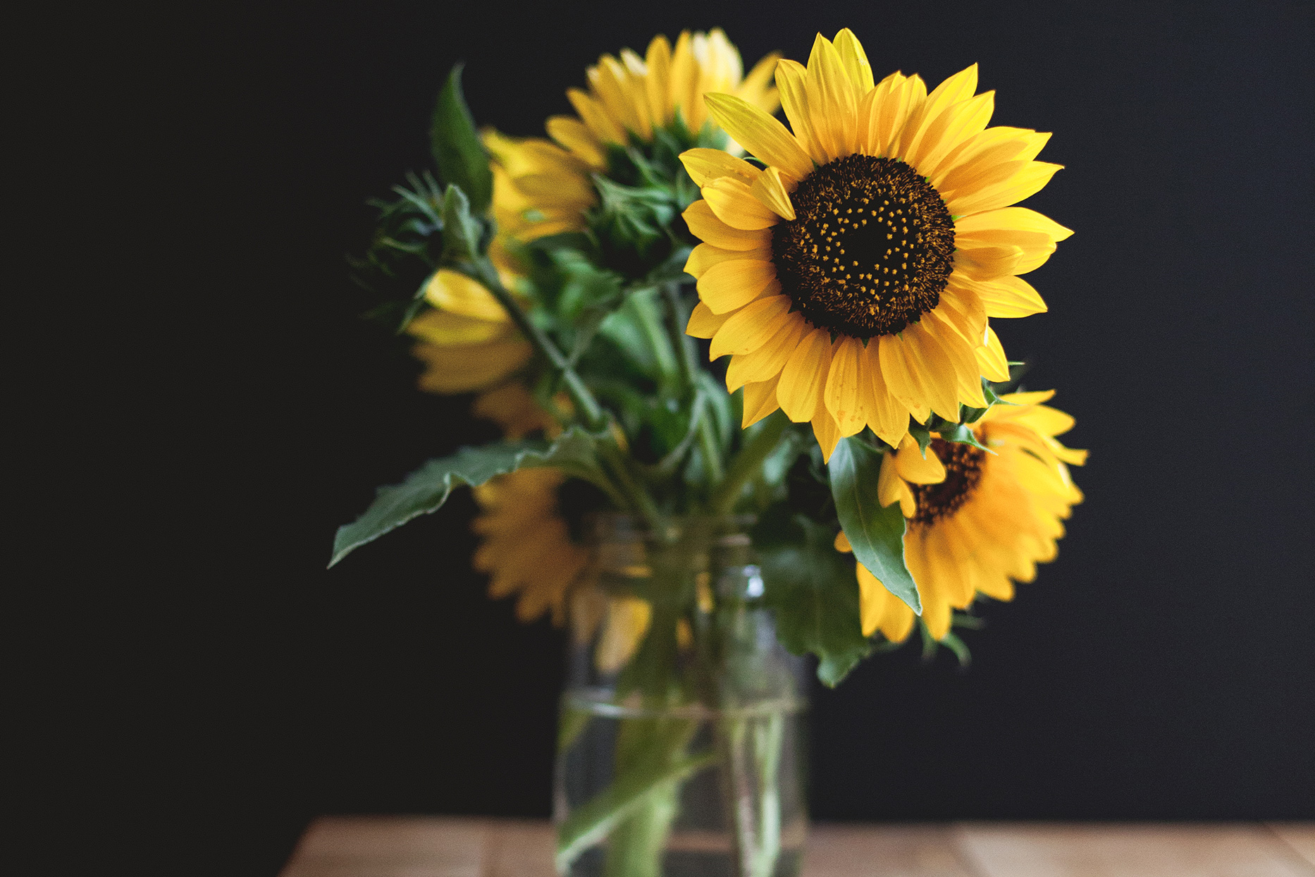 sunflowers in mason jar on table with dark background and high depth of field