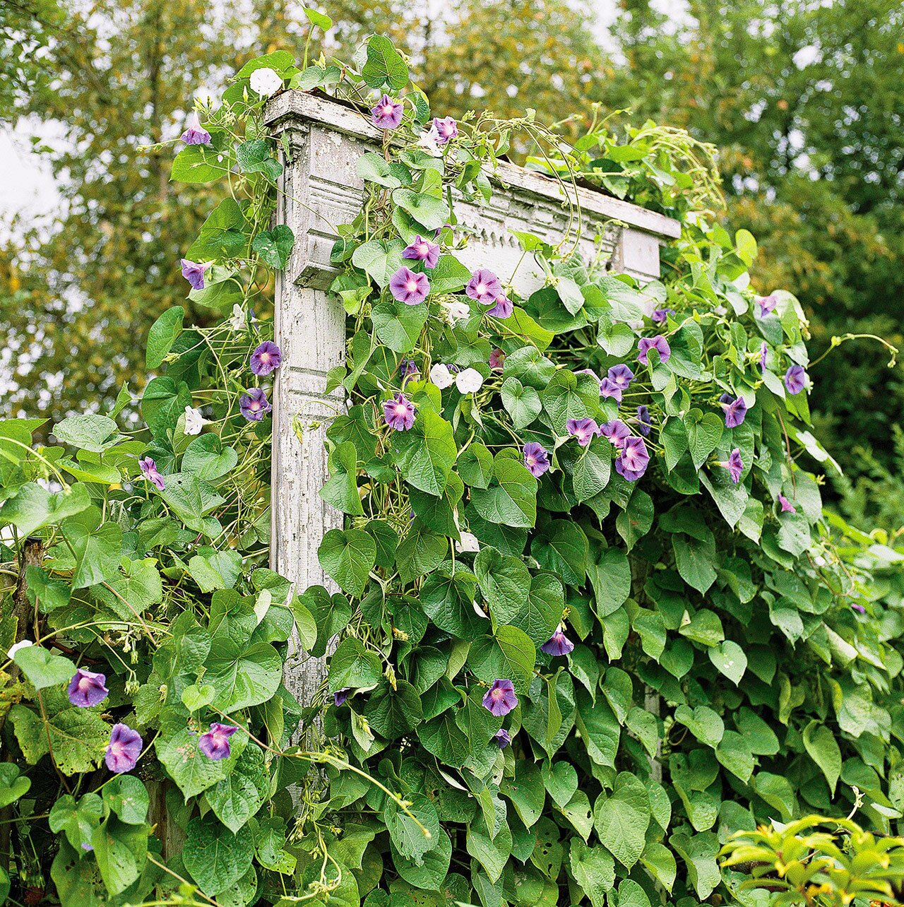 Vine Support Ideas to Take Your Garden to the Next Level   Better ...