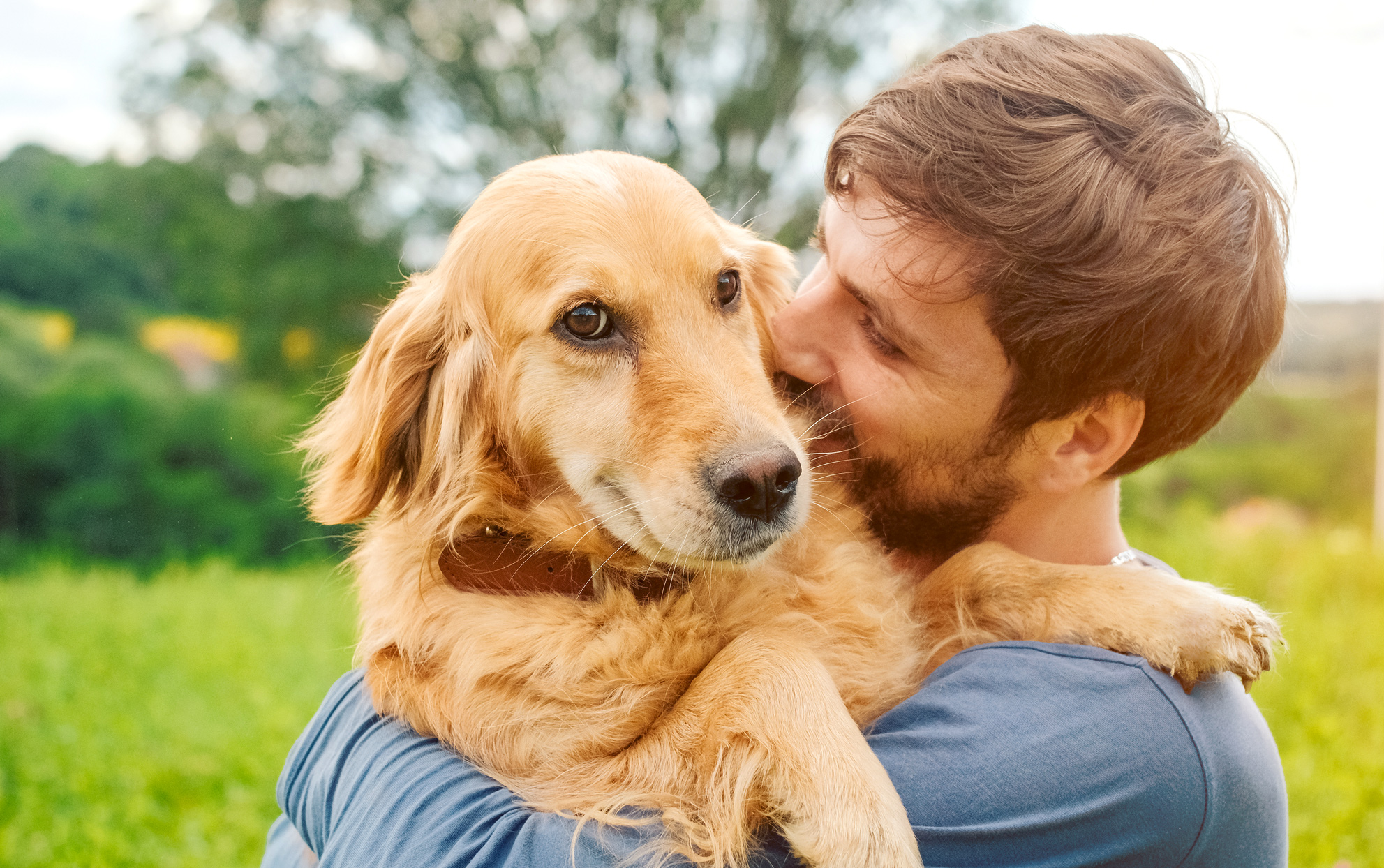 Golden Retriever being held by his owner
