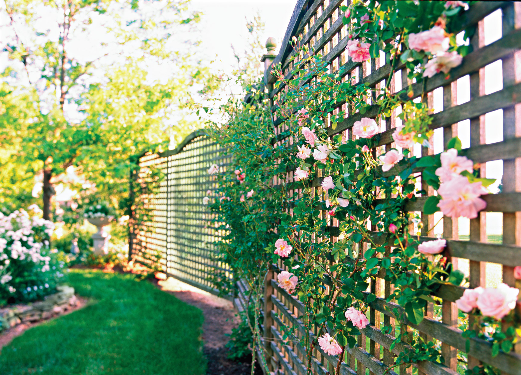 Lattice fence with pink flowers