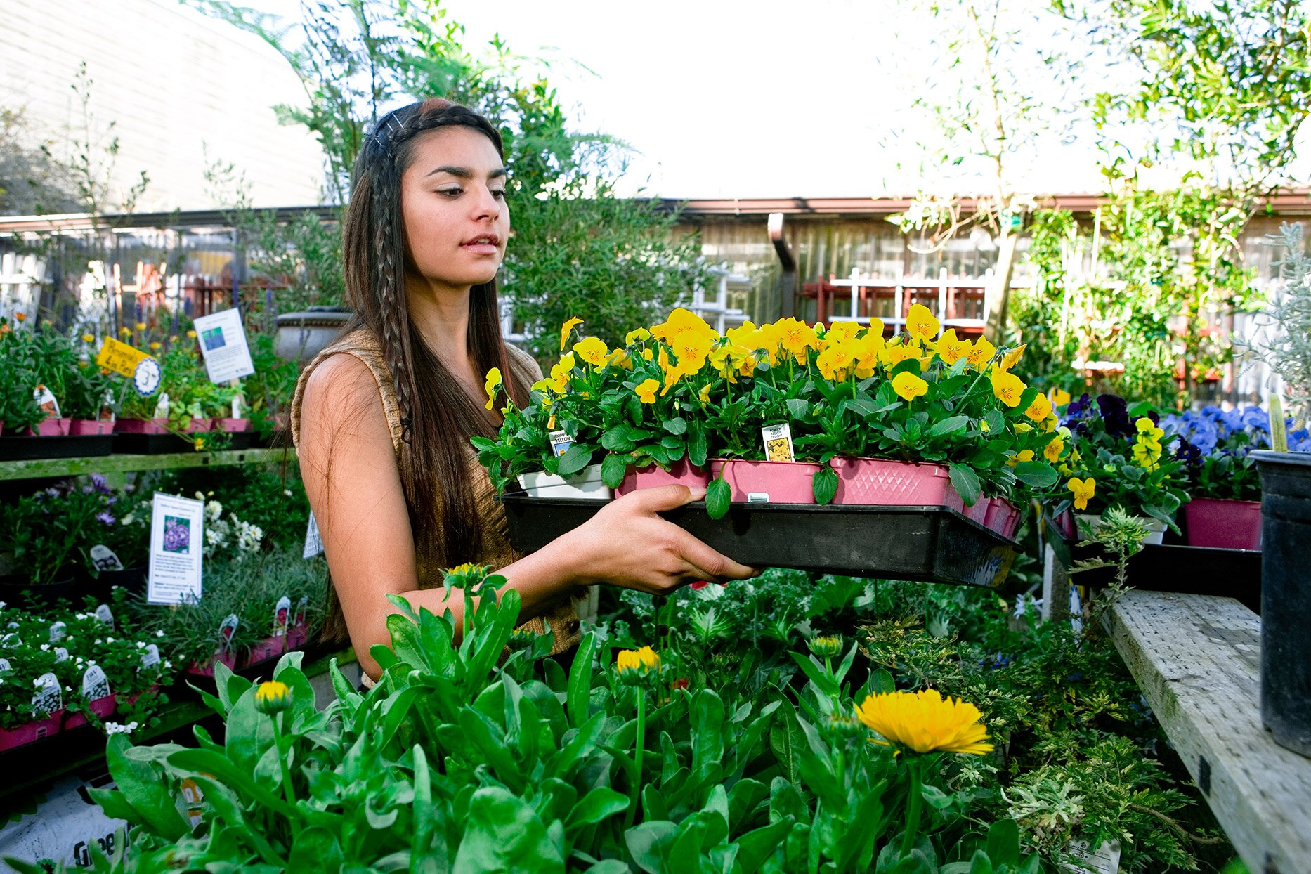 person holding a tray of flowers at a garden center