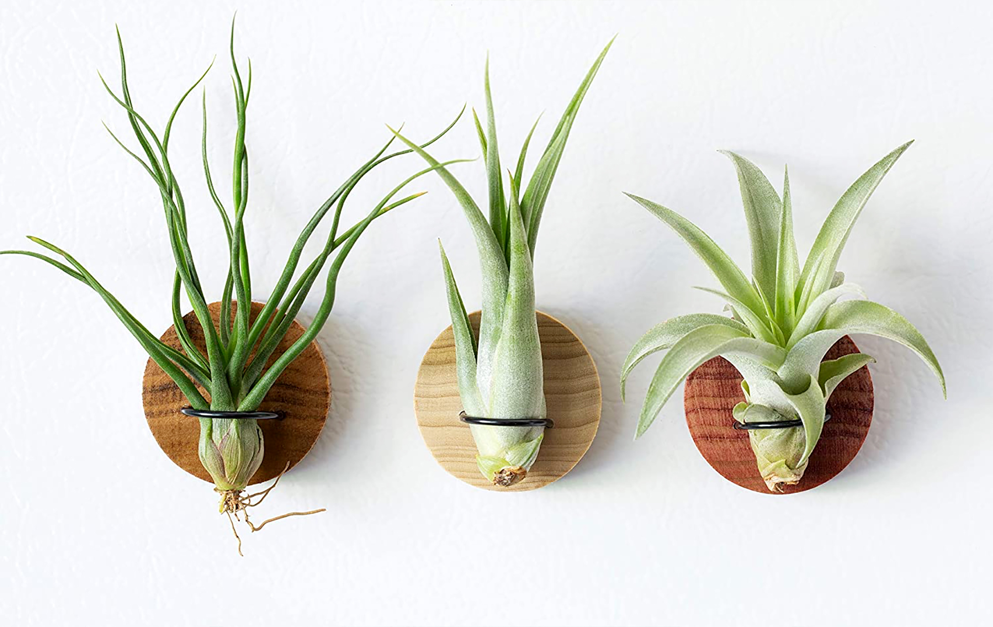 air plant magnets from amazon handmade section