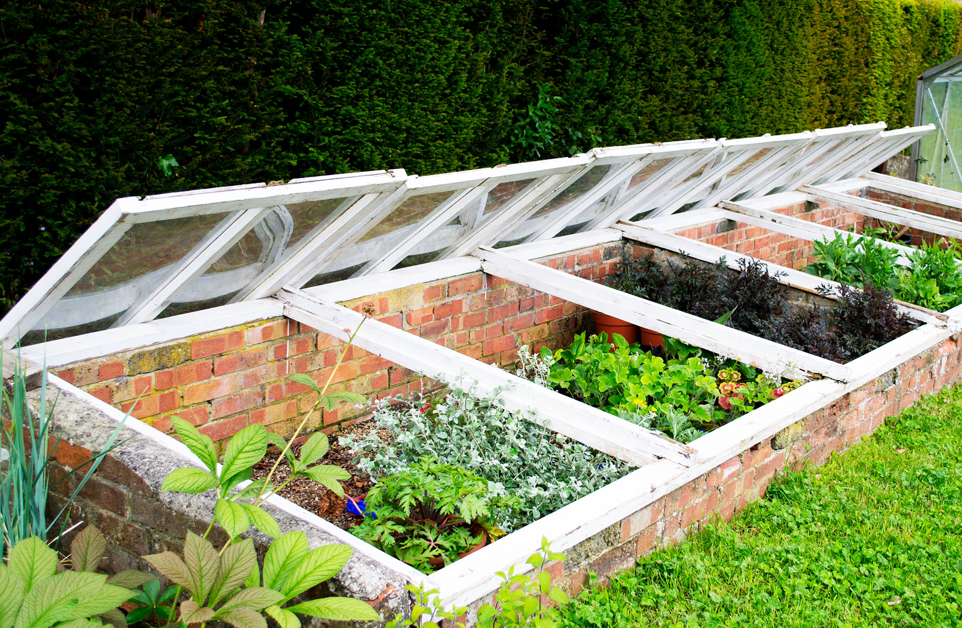 cold frames with plants in a landscaped garden