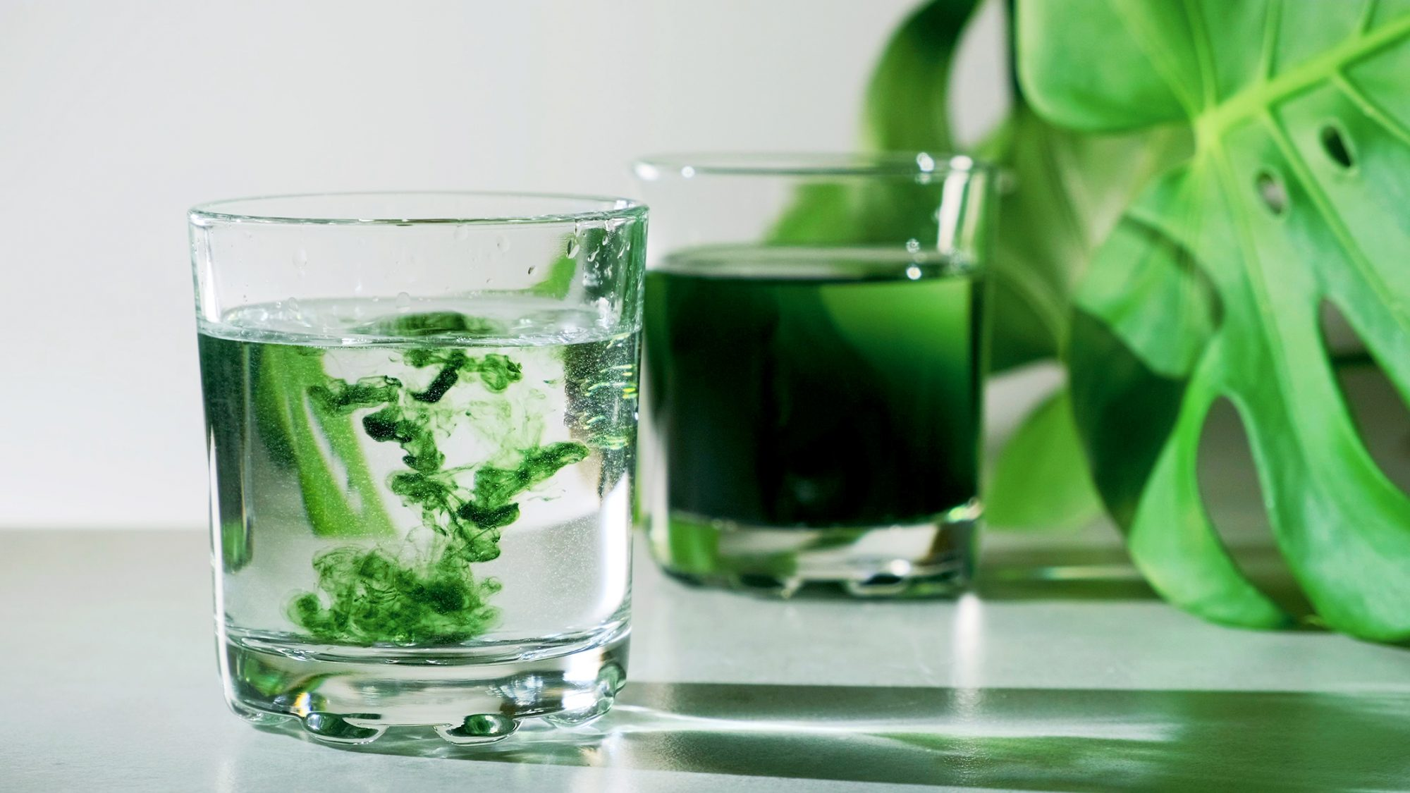Liquid chlorophyll extract is poured in pure water in glass against a white grey background with green leaf