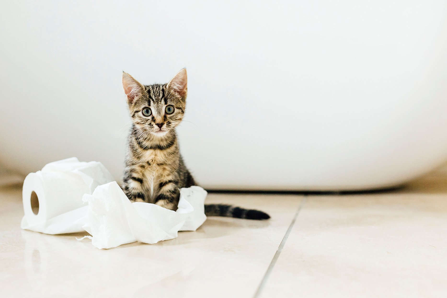 kitten playing with toilet paper in bathroom