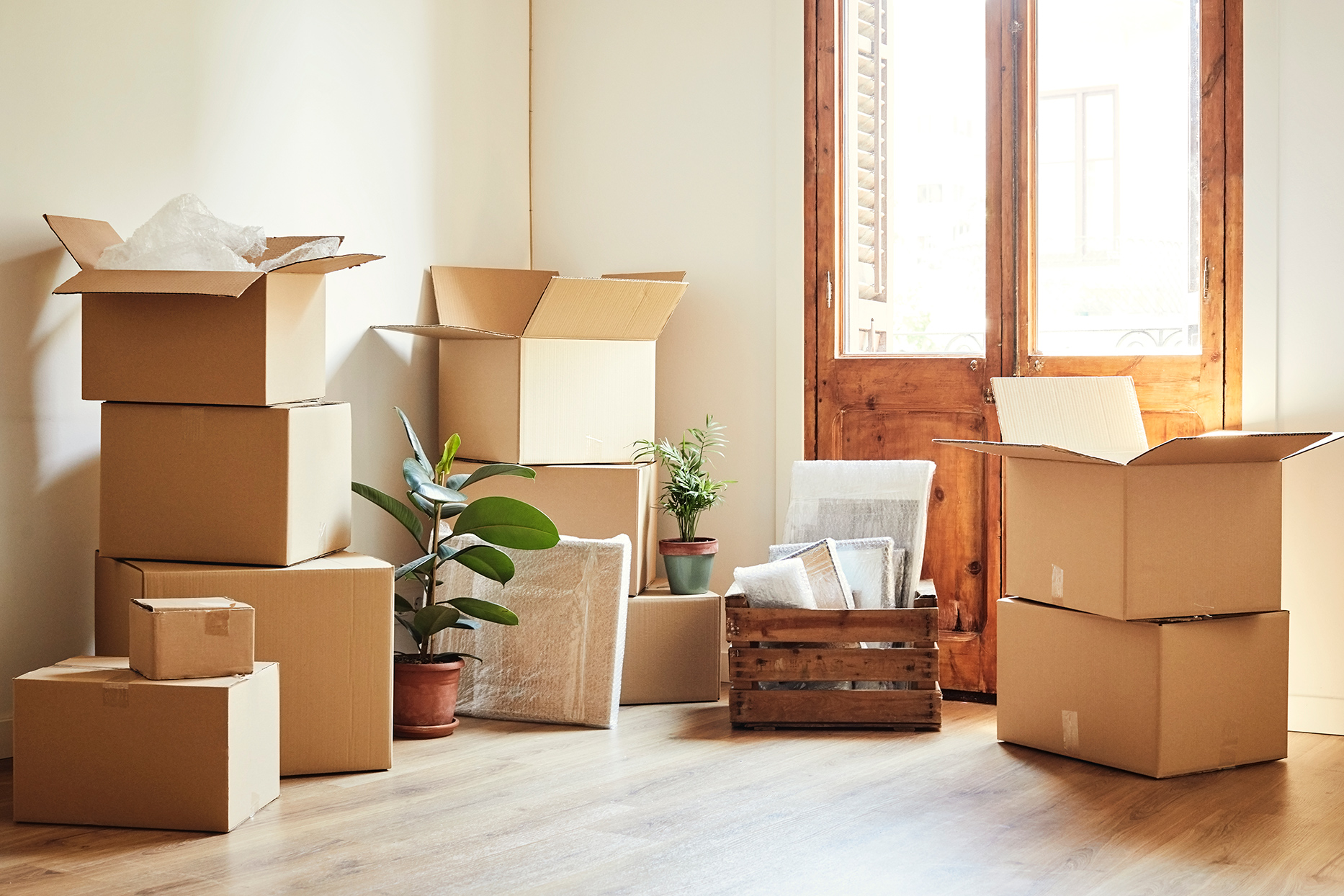 Moving boxes and potted plants at new home