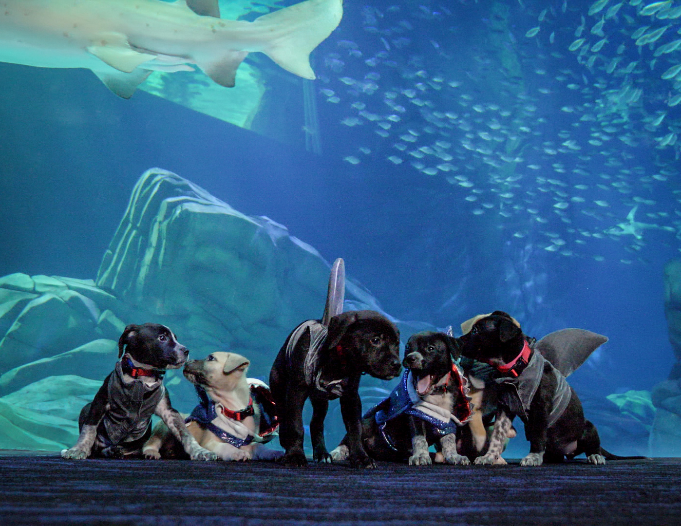Georgia Aquarium Puppies