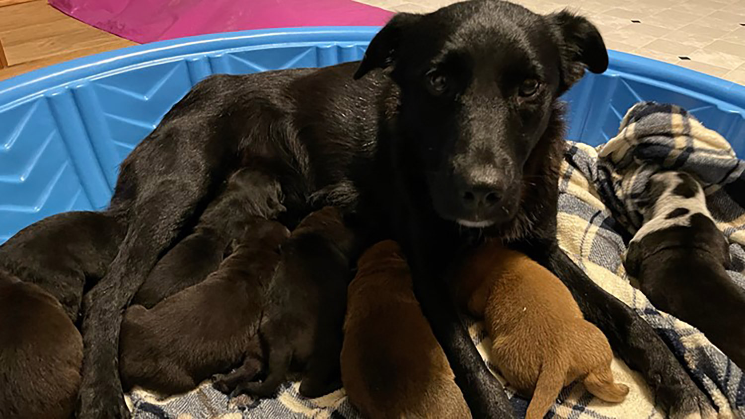 Pepper with foster puppies at Ruff Start Rescue