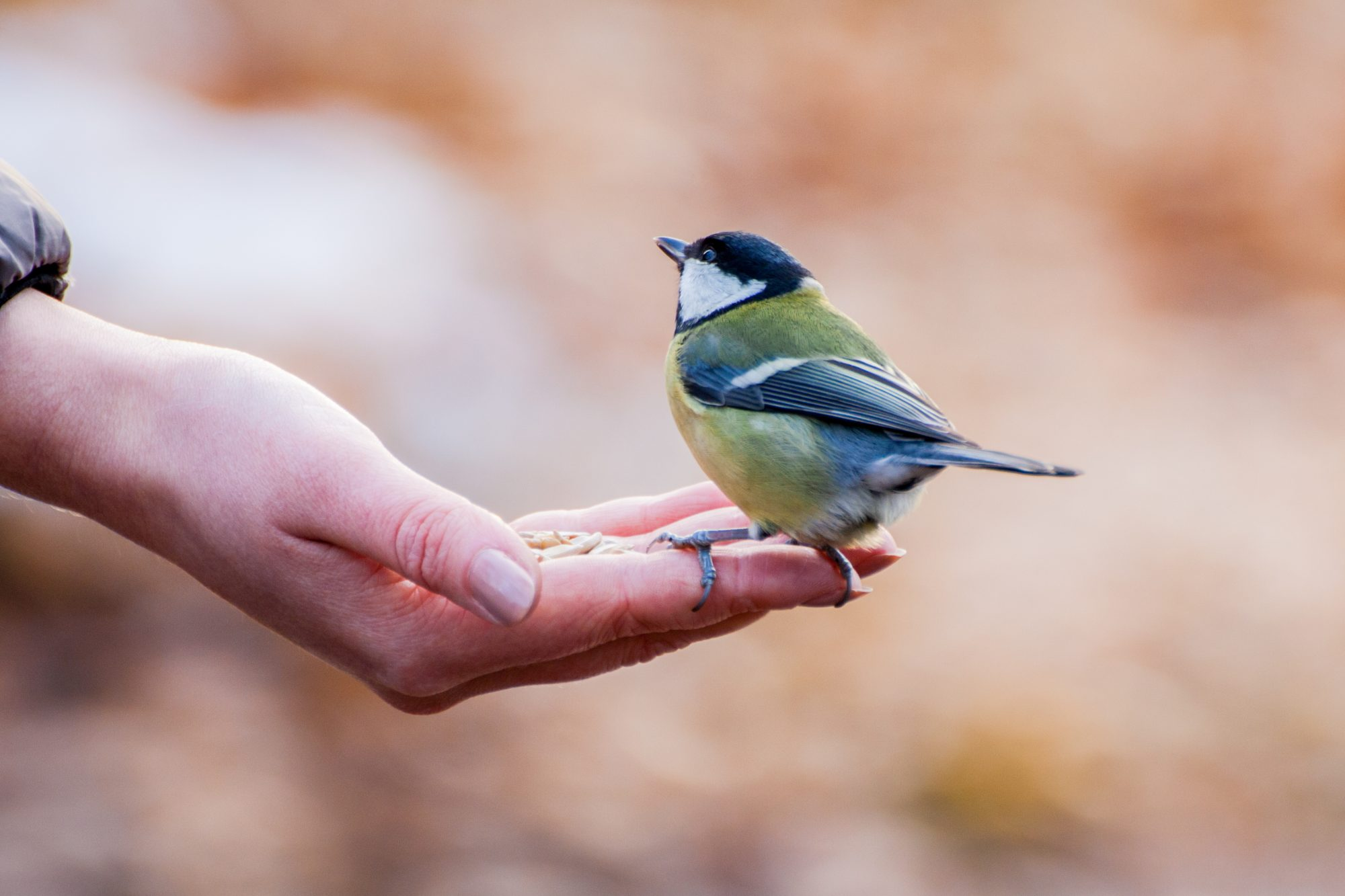 small bird in womans hand outside