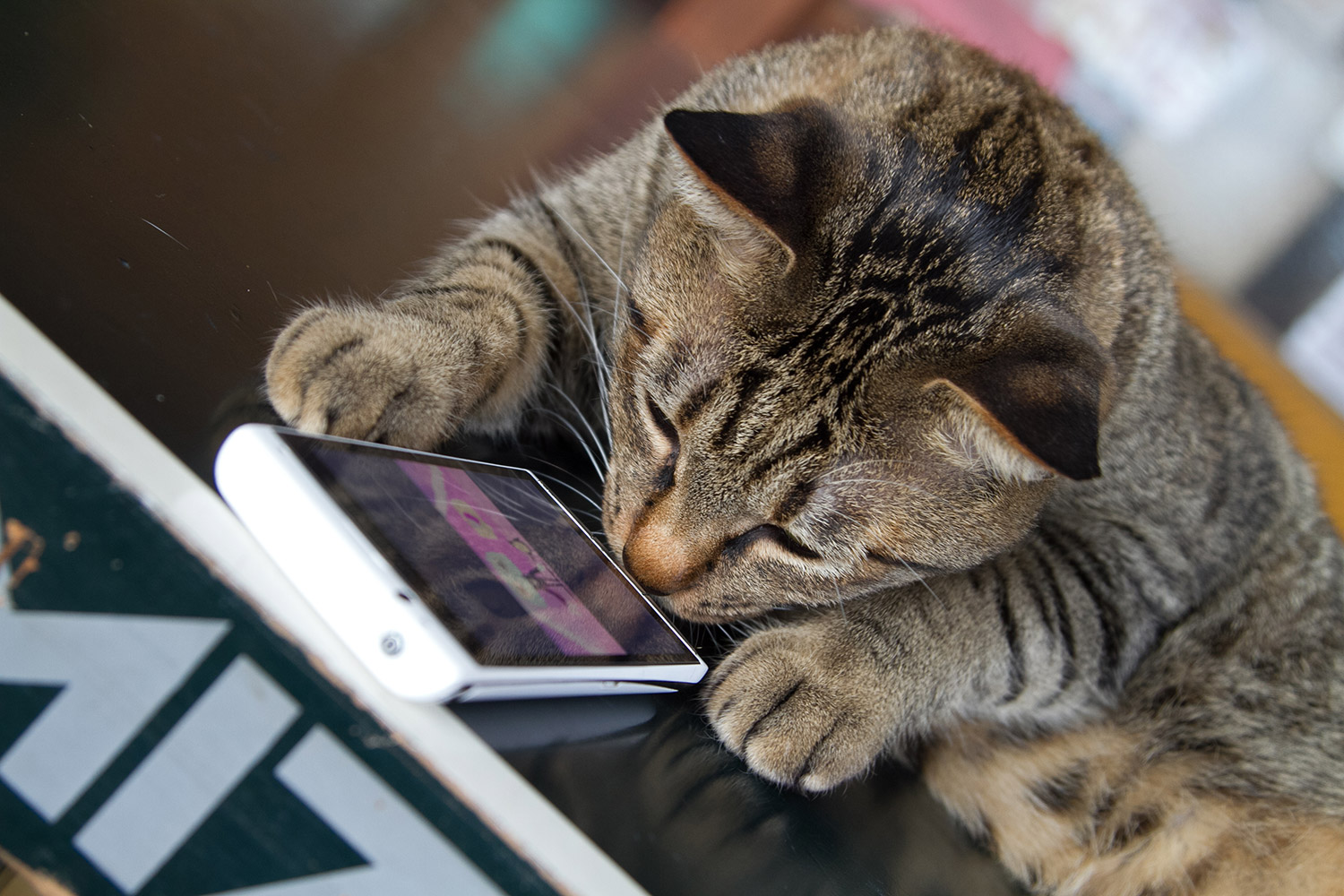 Cat touch the smartphone