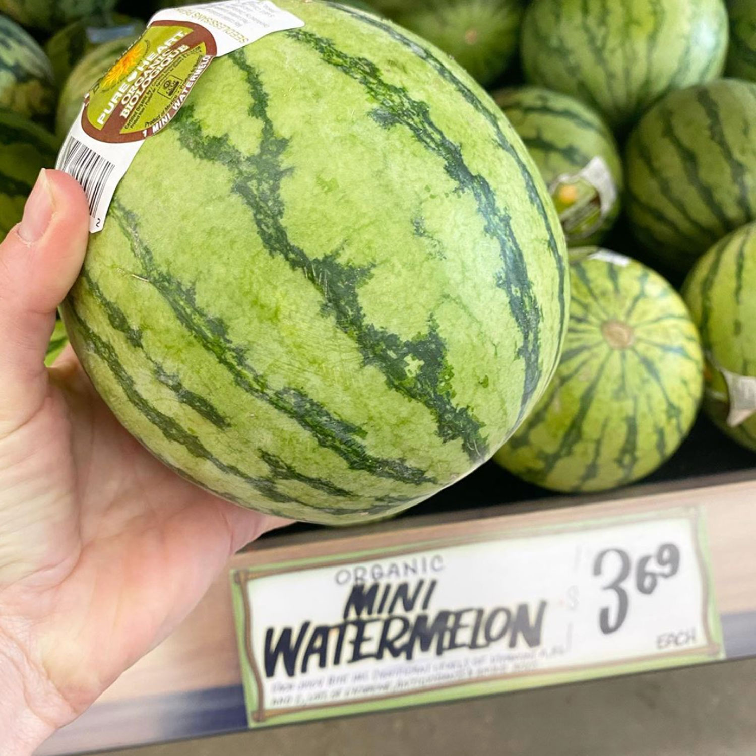 trader joe's mini watermelon
