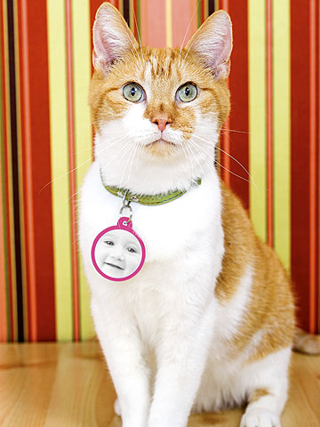 cat with baby picture