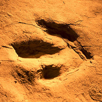 Dinosaur Addicts: See Real Dinosaur Tracks