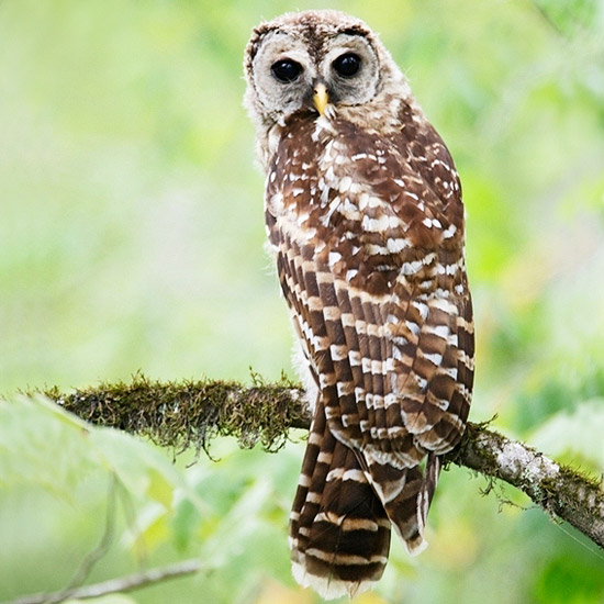 If you like going to the zoo, try an owl prowl
