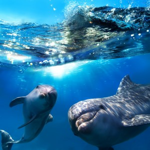 Dolphin-Assisted Birth Plan