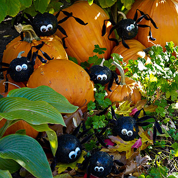 Spider pumpkin patch