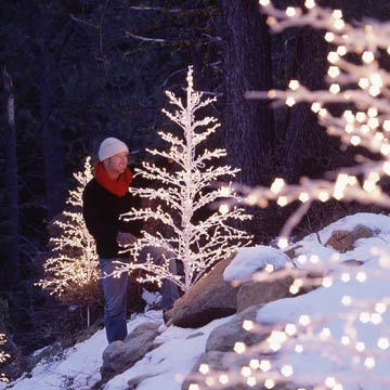wire trees with prestrung lights in forest
