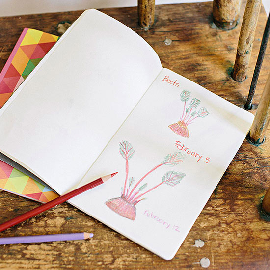 Keep a Plant Journal