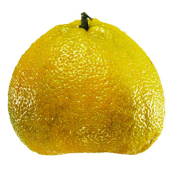 U is for Ugli Fruit