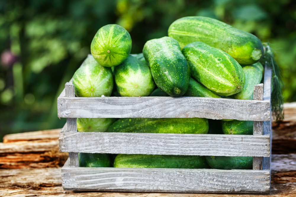 Wooden crate of cucumbers outside