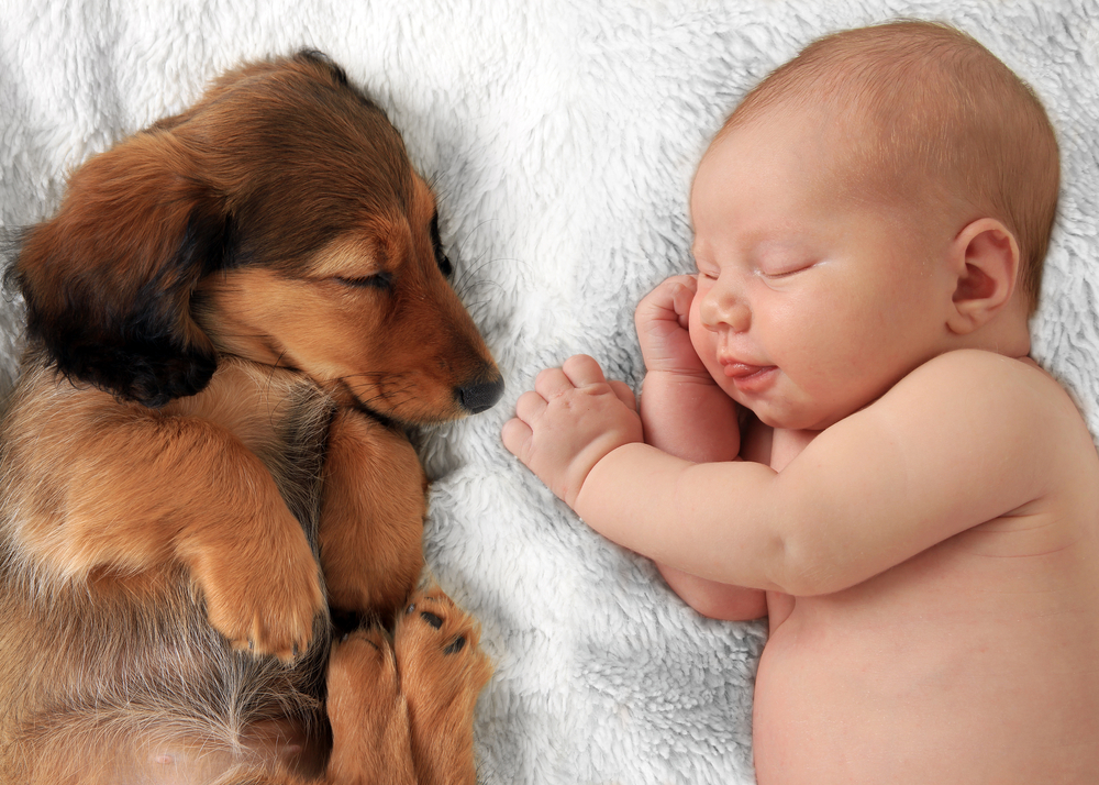 Newborn with dachshund puppy