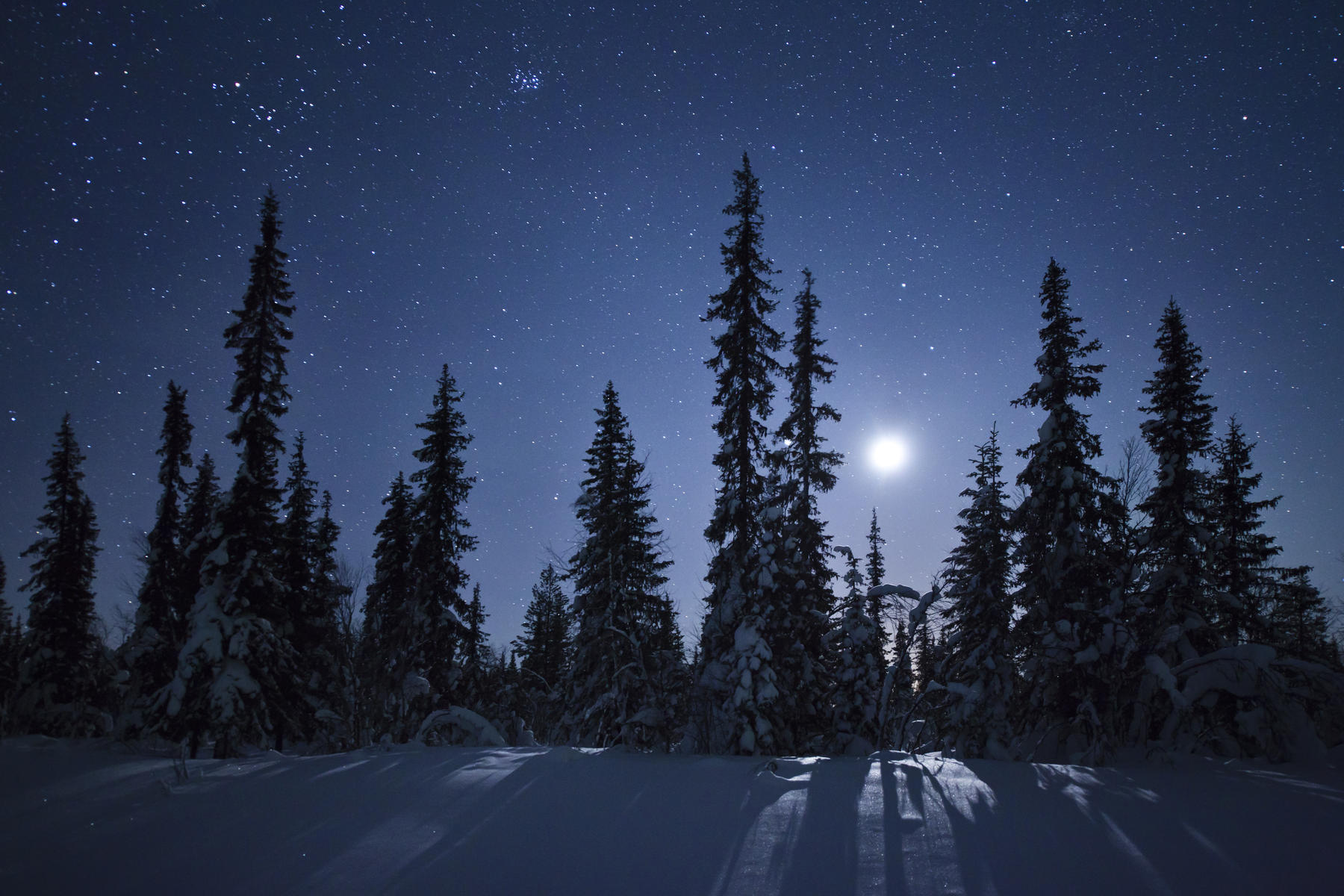 Frozen forest in moonlight