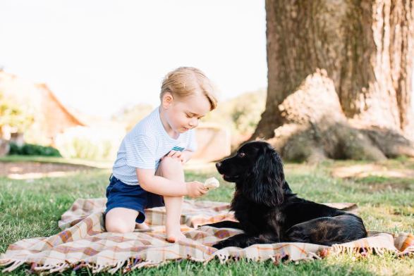 prince george feeds lupo