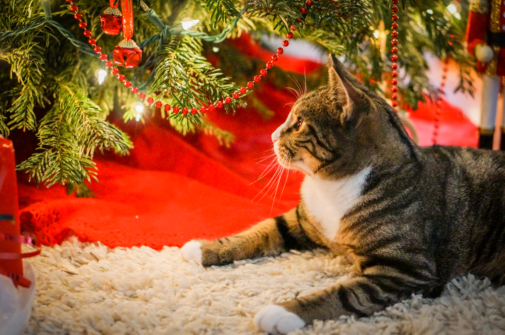 Pet Proof Cat Sitting Under Christmas Tree