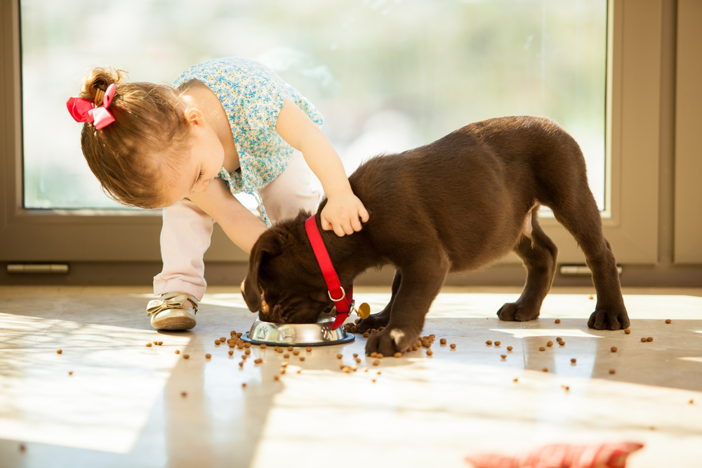 Puppies and Babies food