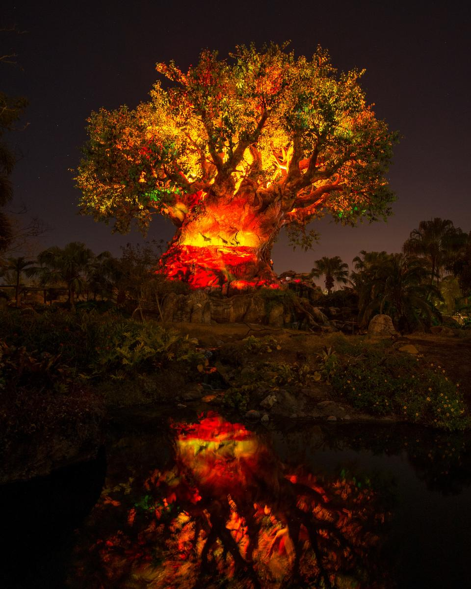 Disney After Dark Animal Kingdom