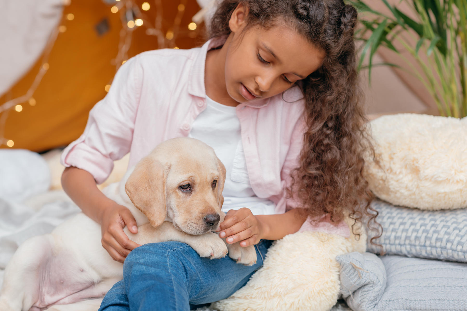 Young Girl Looking at Labrador Puppy Laying on Legs