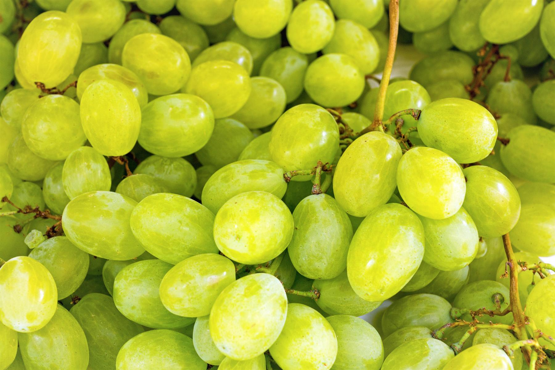 Green Grapes Closeup