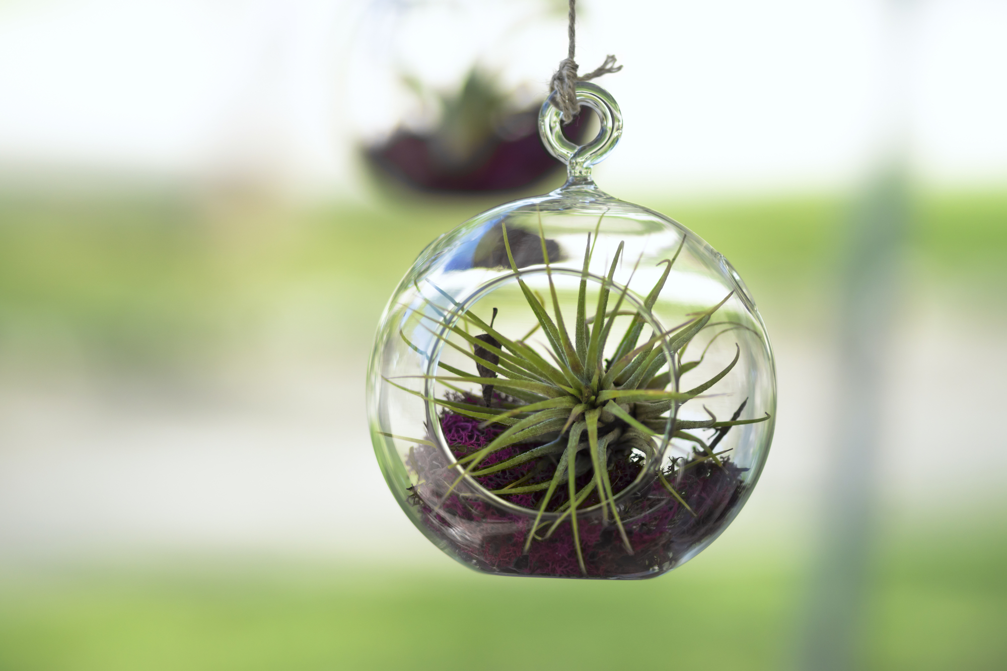 Air Plant Indoor Garden