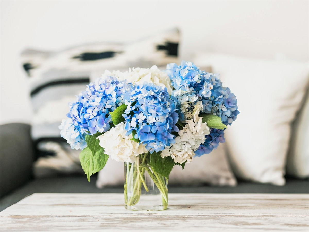 White and Blue Flowers in Glass Vase on Wooden Table