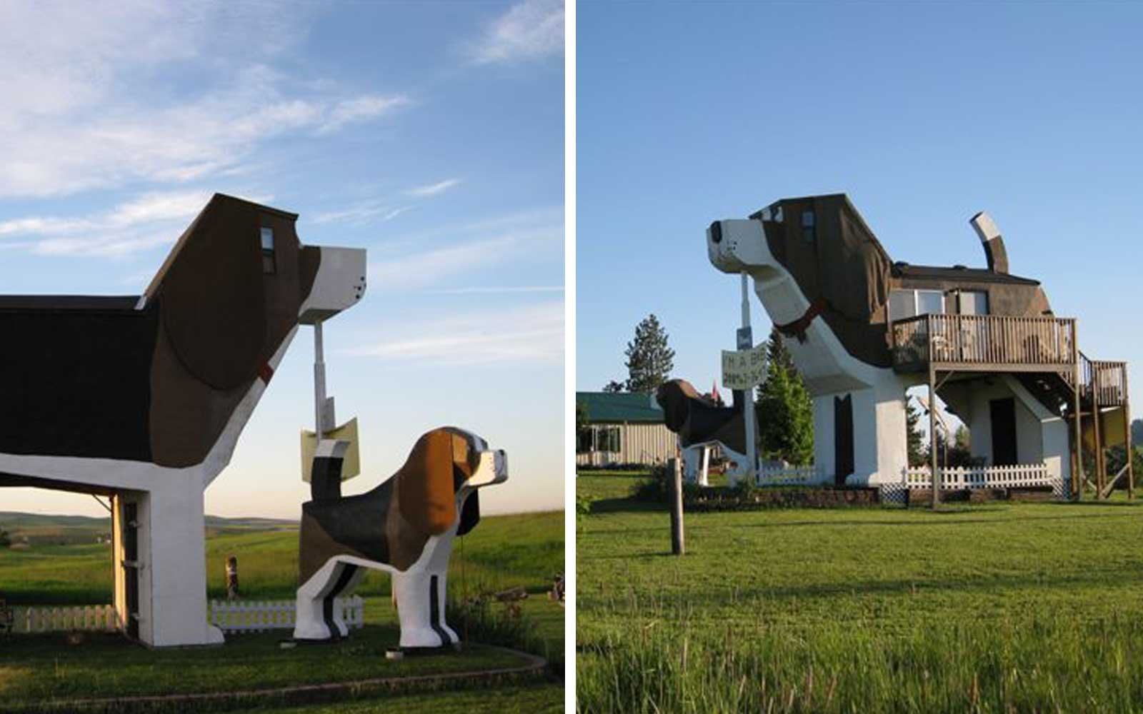 Giant Dog Beagle Airbnb