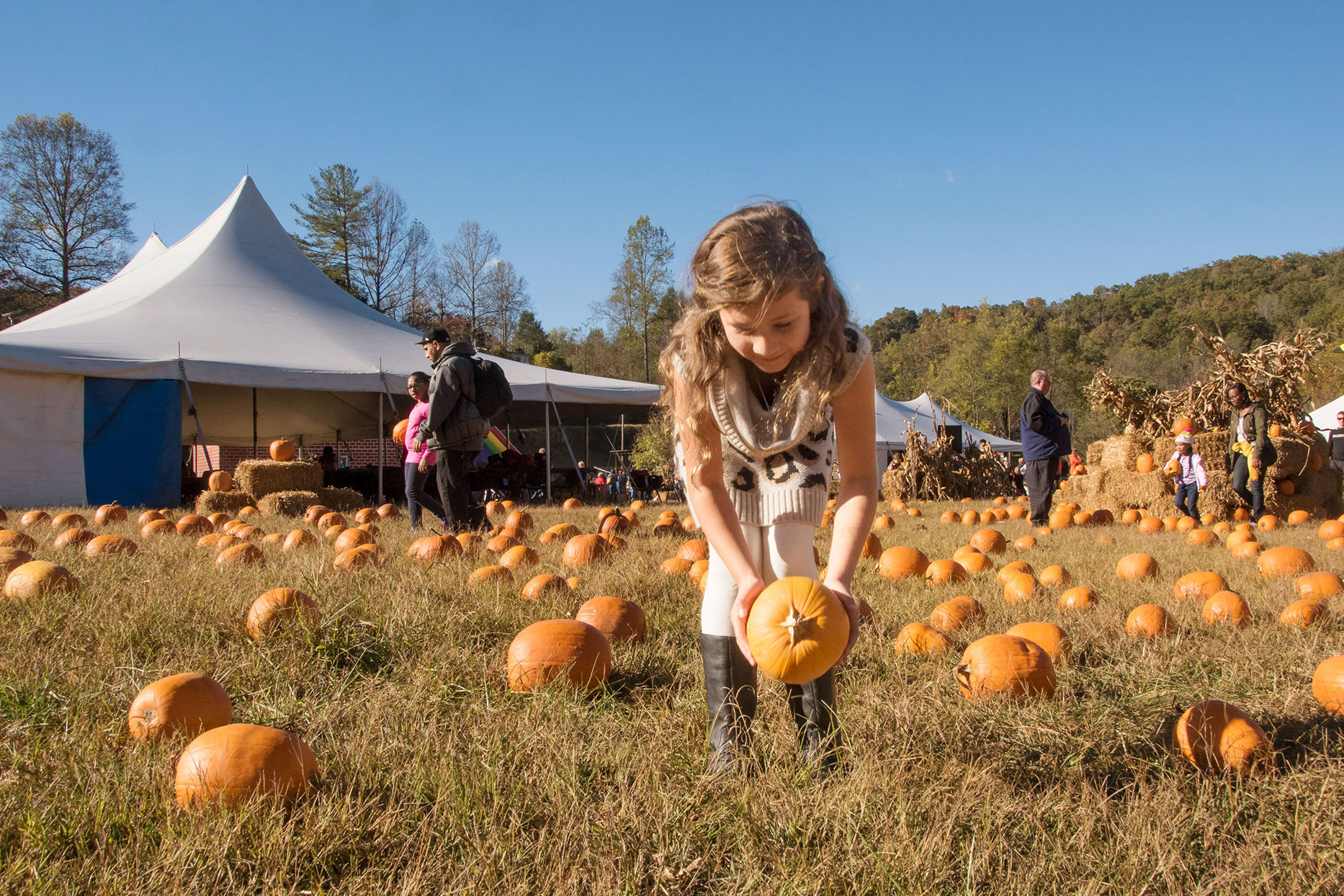 girl picking up pumpkin in patch