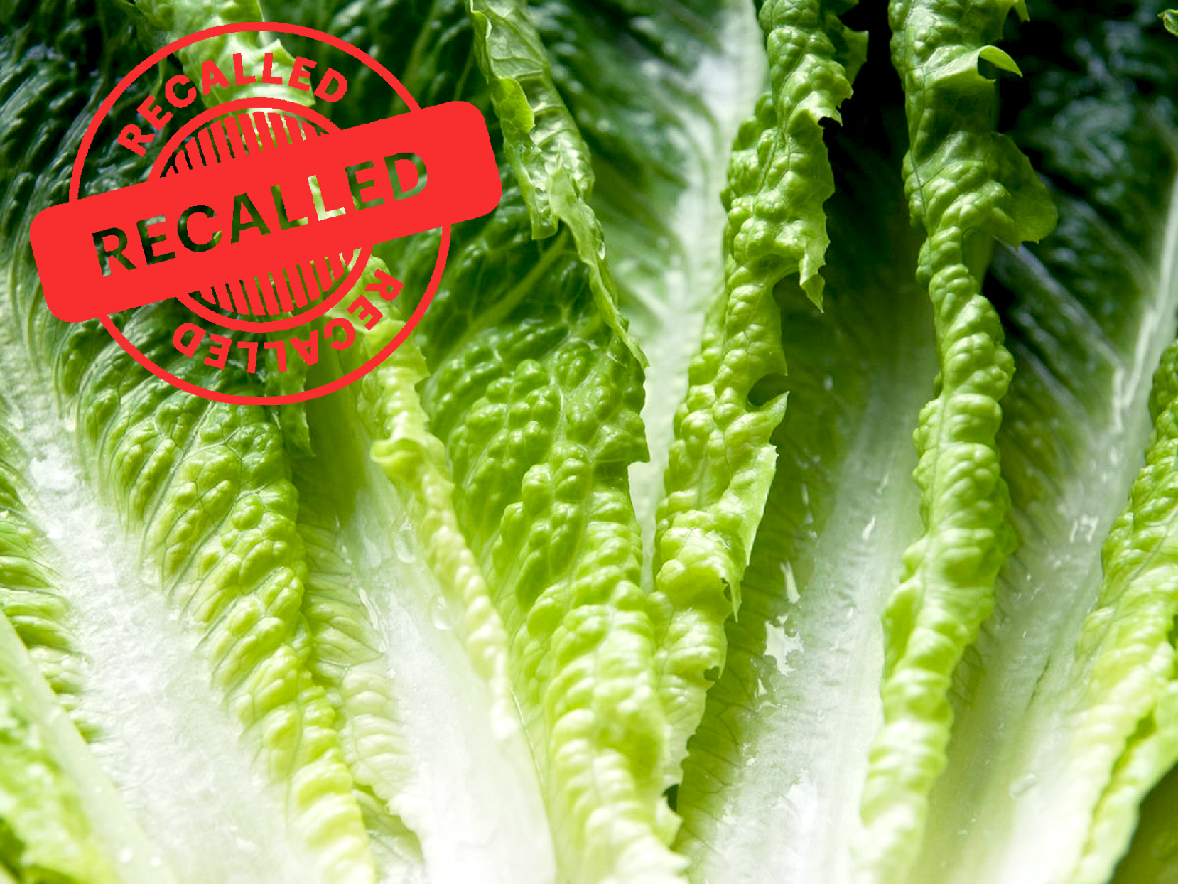 Do Not Eat Romaine Lettuce Grown in California's Salinas Valley, CDC Warns