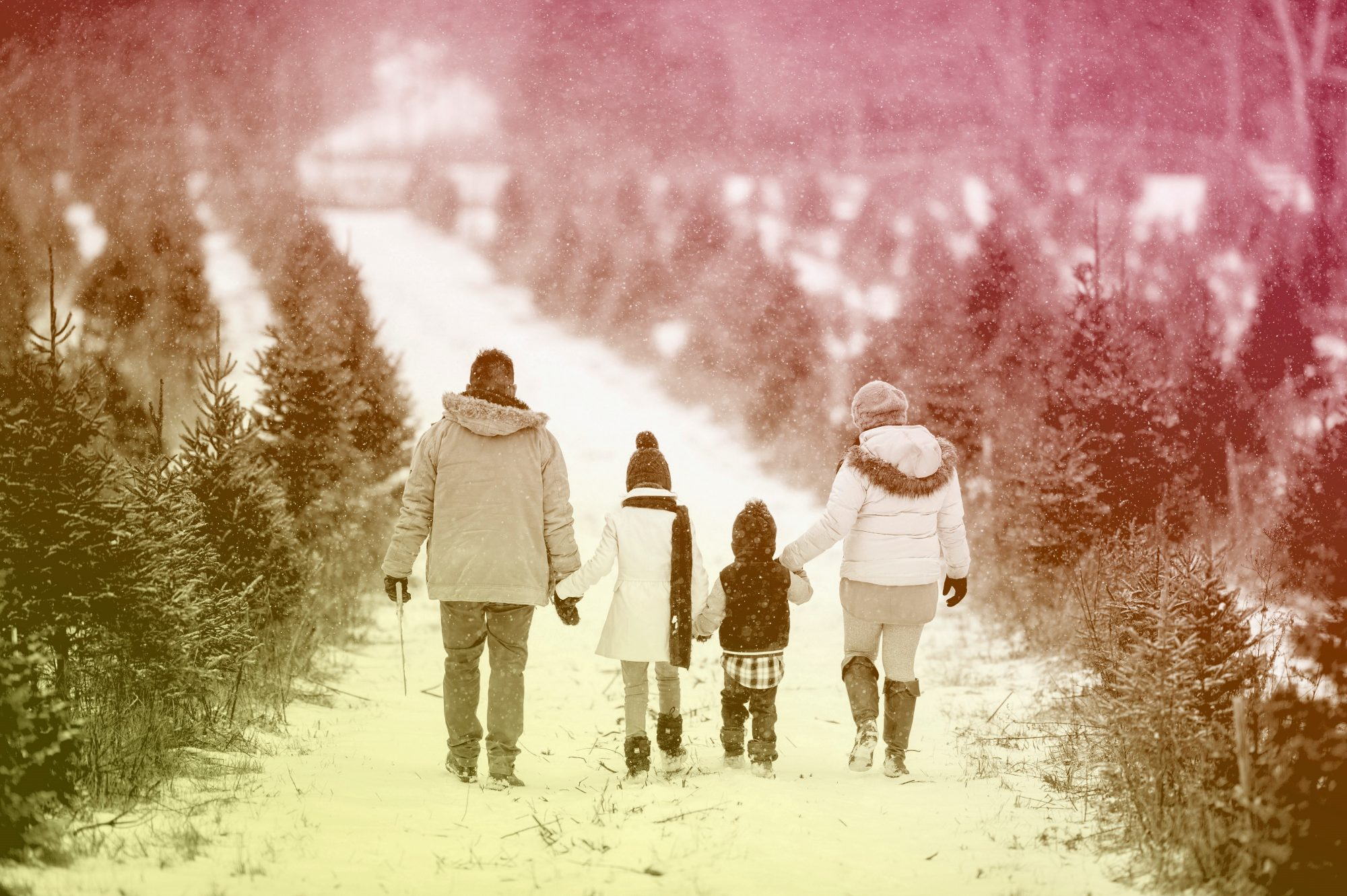 Family Holding Hands Walking In Snow Through Christmas Tree Farm