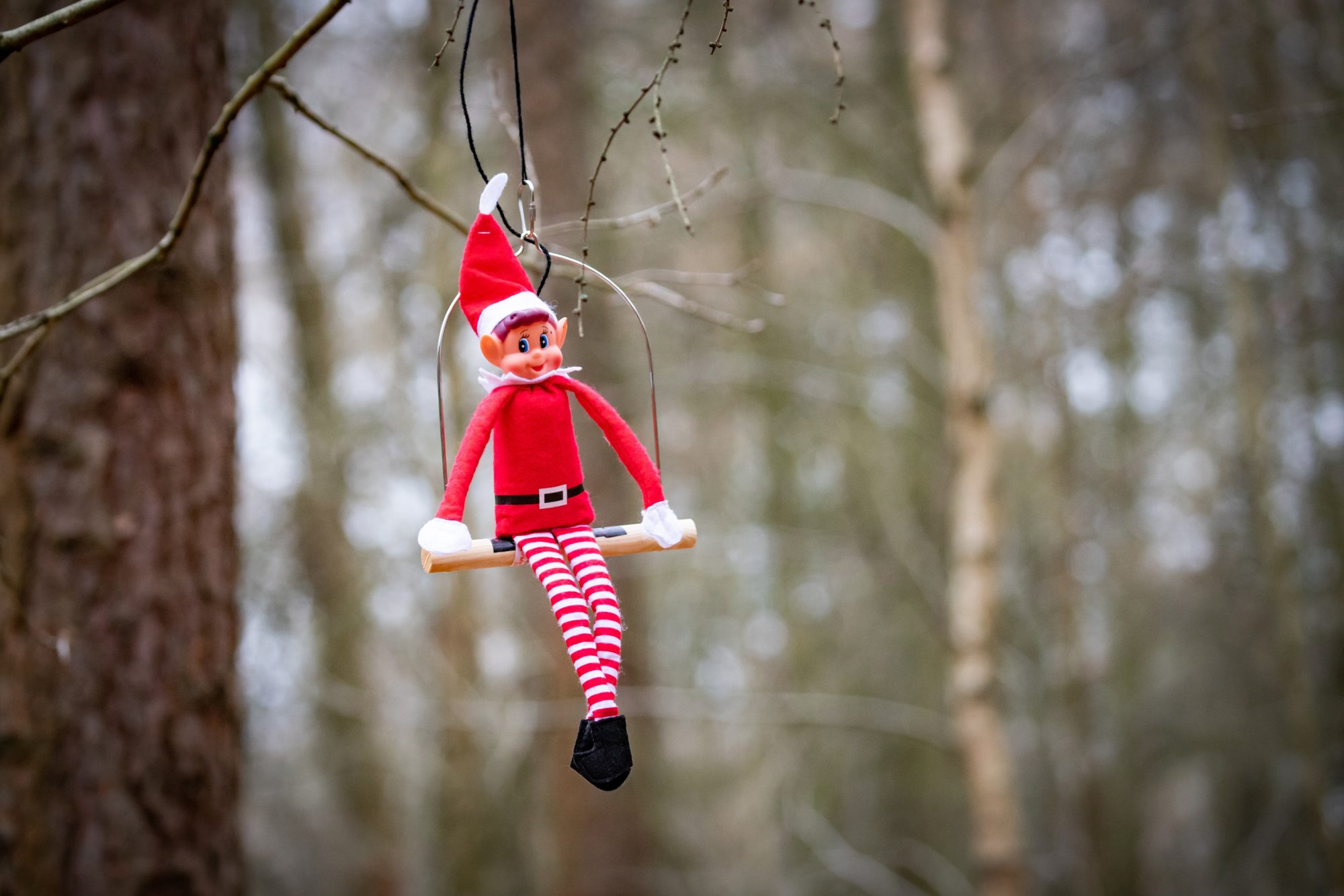 elf on a shelf in tree