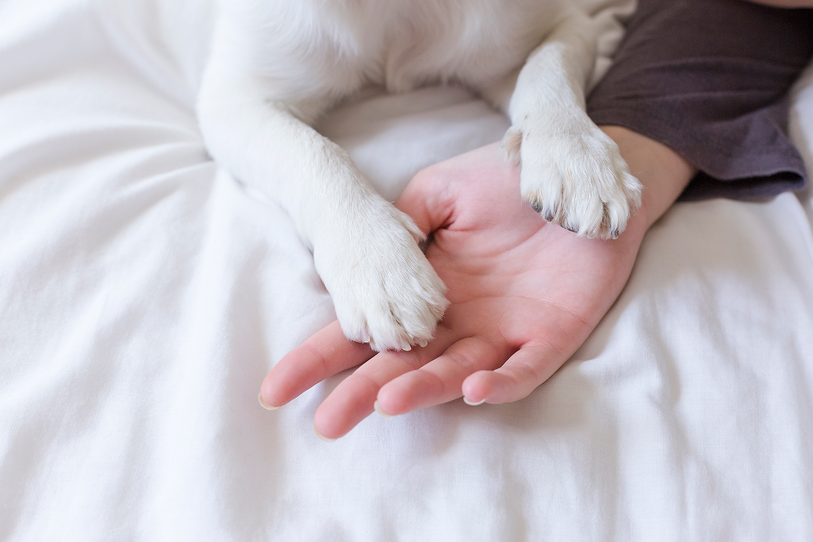 dog paws on people