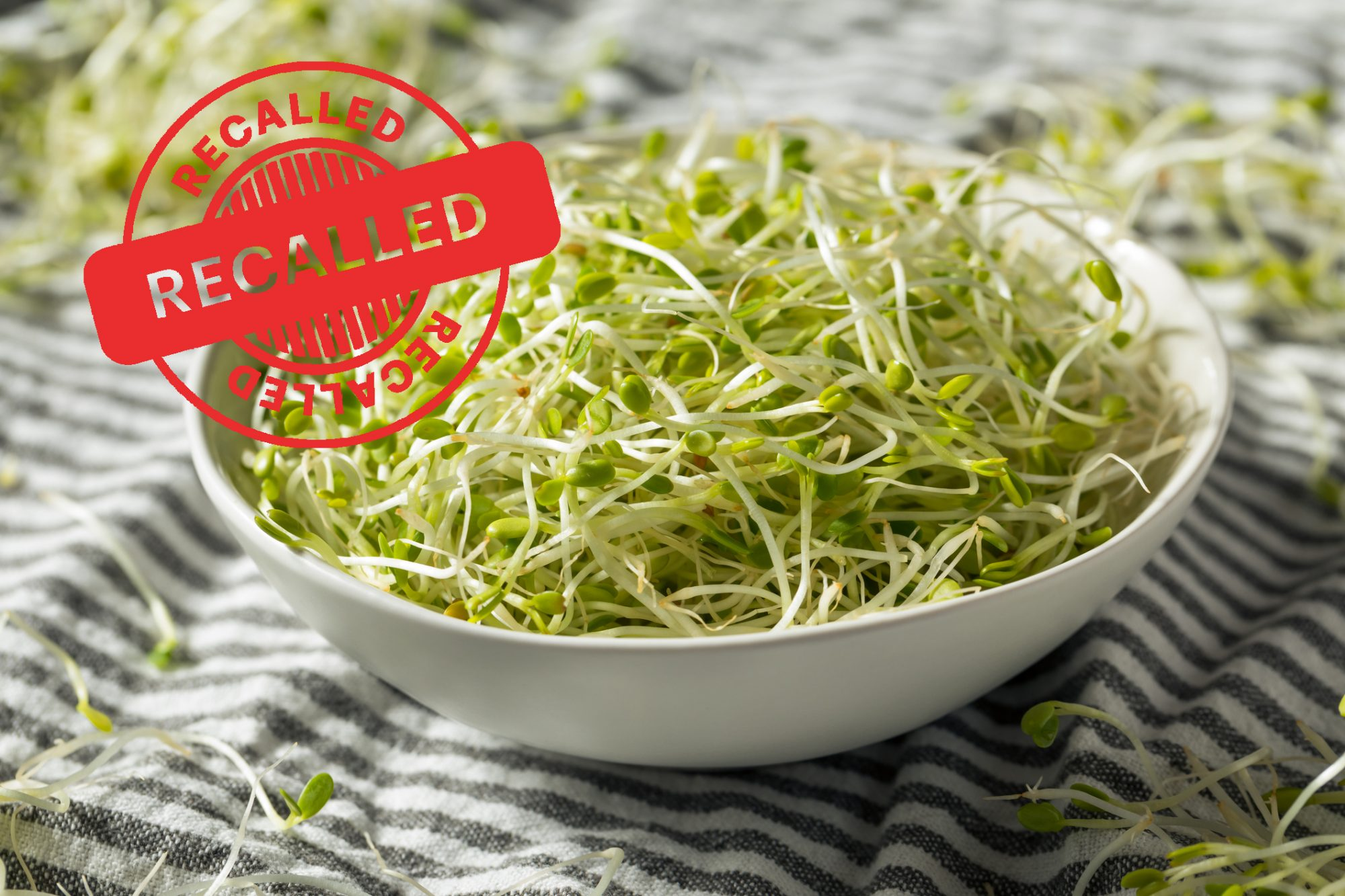Raw Green Organic Clover Sprouts MIcrogreens