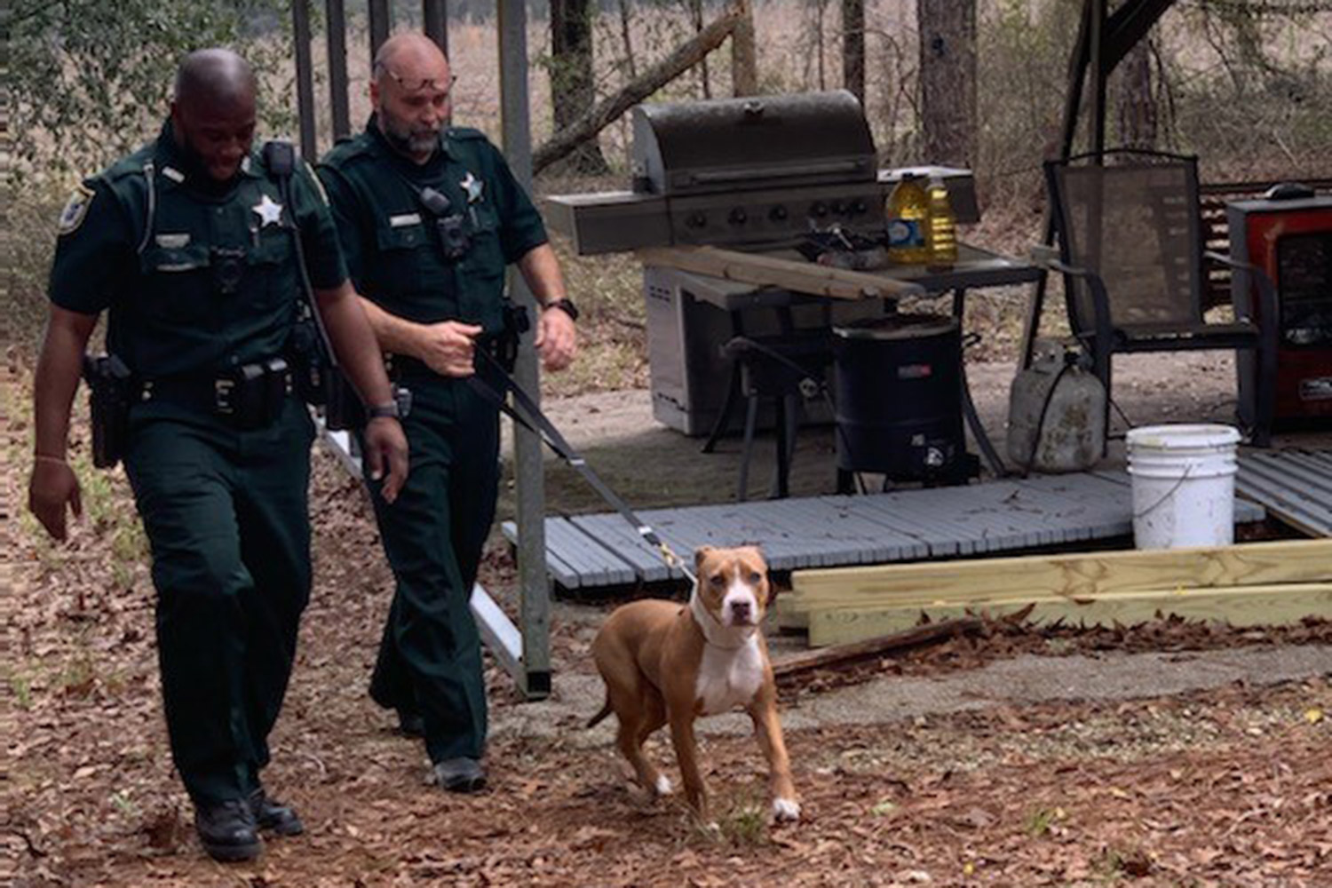 Buddy the pit bull with Suwannee County Sheriff's Office Police