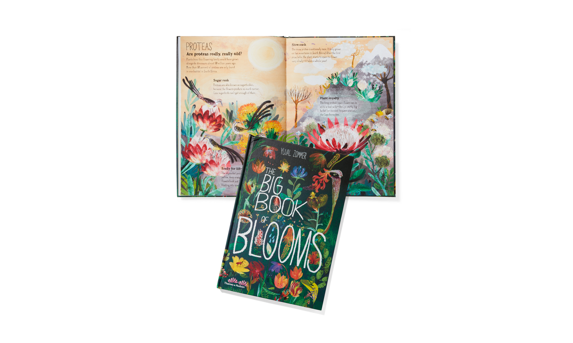 The Big Book of Blooms cover and open spread