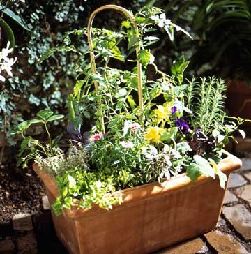 Edible Container Garden Midwest Living