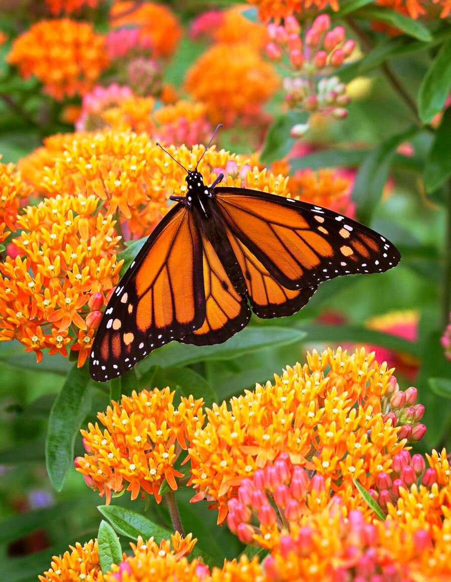 6 Easy Care Midwest Native Plants Midwest Living